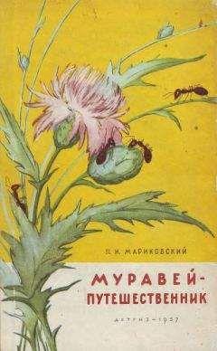 Павел Мариковский - Муравей-путешественник